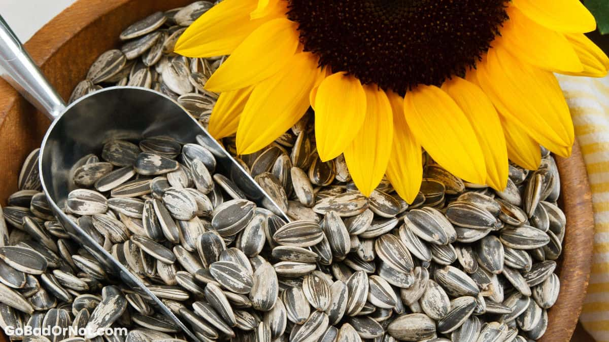 Do Sunflower Seeds Go Bad