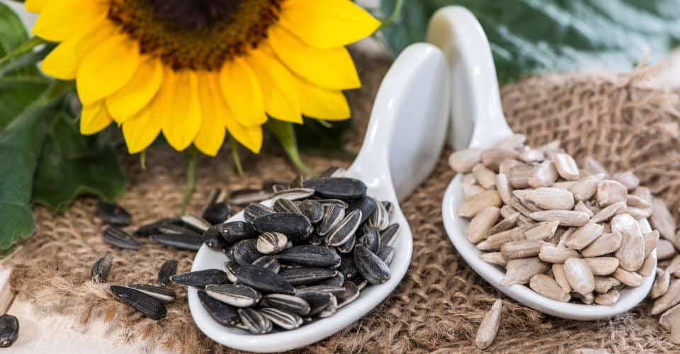 sunflower seeds in spoons