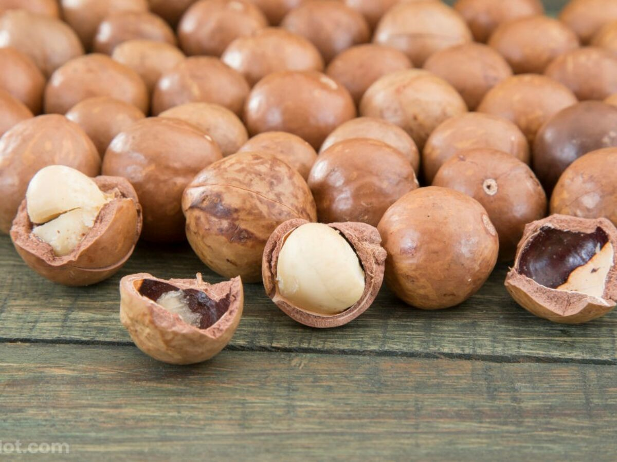Do Macadamia Nuts Go Bad Simple Answer Go Bad Or Not